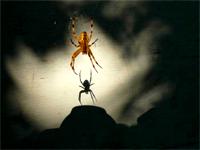 halloween ecard spider 200w