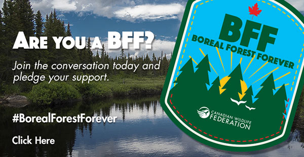 Boreal Forest Forever campaign logo